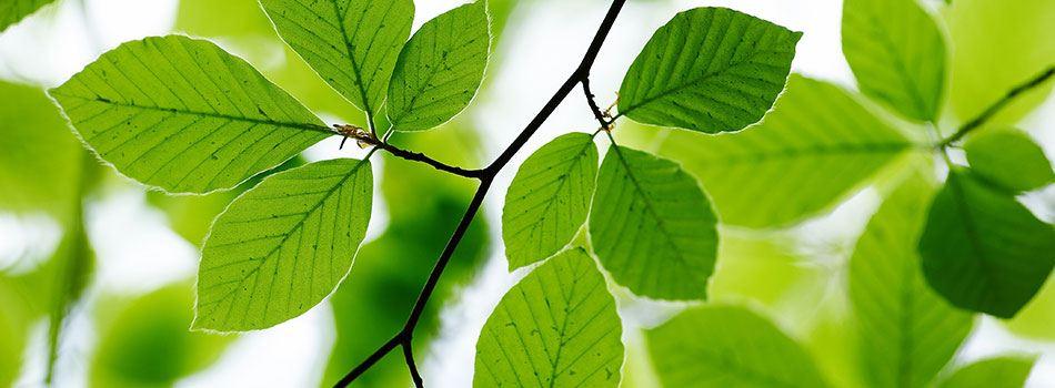 Benzoesyre - Er det naturligt?
