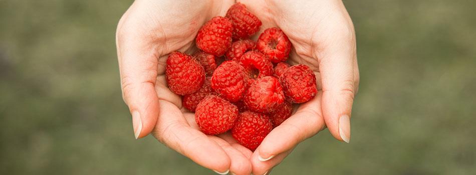 Hvad gør Fruitful Nights så effektiv?
