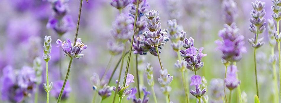 Sundhedsrisici forbundet med anvendelse af parfume